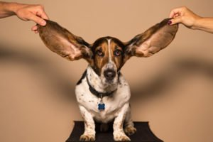 Content marketing case study: How to Get People to Listen